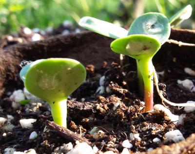 Novi projekt Razvoj biorazgradivog netkanog agrotekstila iz prirodnih i obnovljivih izvora KK.01.2.1.02.0270